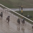 """American Pharoah wins a """"sloppy"""" edition of the Rebel Stakes in 2015."""
