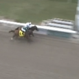 Majestic Harbor (inside) holds on to win the Mineshaft Handicap Feb. 20.