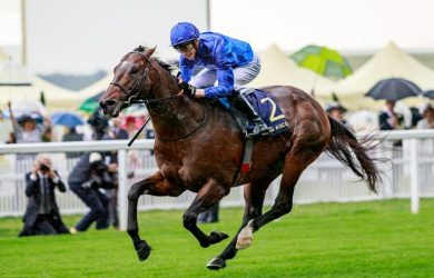 - Photo Courtesy of Godolphin.com -