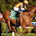 Curlin's Honor horse