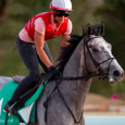 Tacitus - Contributed by Becky Donald / Saudi Arabia Jockey Club