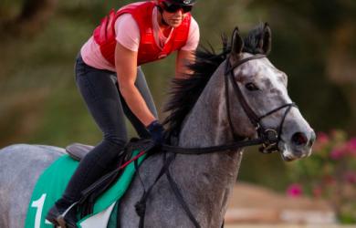 Tacitus - Contributed by Becky Donald / Saudi Arabia Jockey Club