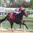 Santa Anita Park Cancels Live Horse Racing