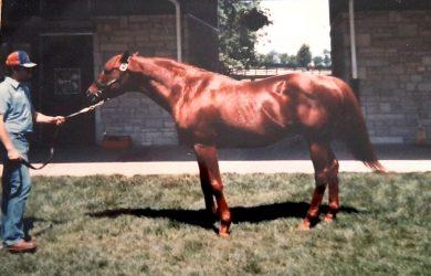 Stallion Stories: Raise A Native