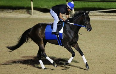 Midnight Bisou from Churchill Downs