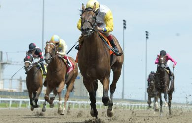 Shirl's Speight - Courtesy of Woodbine Racetrack /Michael Burns Photo