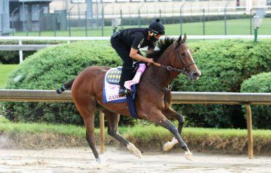 Gamine Horse