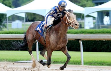 Mr Big News Horse