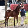 American Heiress - Photo Courtesy of MyRacehorse.com