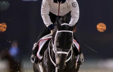 Chuwa Wizard credit by Erika Rasmussen and Dubai Racing Club