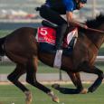 Magny Cours - Photo Courtesy of Dubai Racing Club & Mathea Kelley