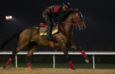 Pink Kamehameha credit by Erika Rasmussen, Dubai Racing Club
