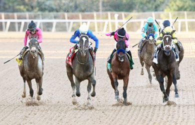Supert Stock - Photo Courtesy of Oaklawn Park